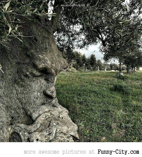 The Thinking Tree in Puglia, Italy